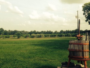 WW vineyard